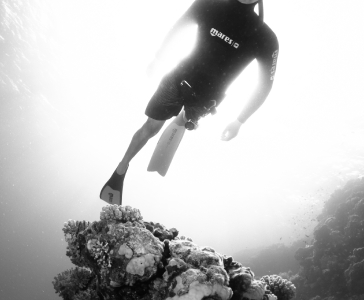 Dahab Fun Diving